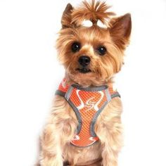 American River Neon Sport Choke-Free Dog Harness - Iridescent Orange. Your pup will stand out from the crowd in this fresh American River Neon Sport Choke-Free Dog Harness in Iridescent Orange! Unique diamond-pattern mesh Mesh is color blended for a dimensional look Striking crisp white overlay Reflective tabs Patented design Convenient step-in style Adjustable for custom fit Machine washable Why We Love It:This American River Neon Sport Choke-Free Dog Harness in Iridescent Orange is one of…