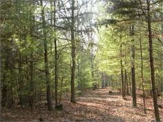 Galax, Galax City County, Virginia Land For Sale - 7.1 Acres