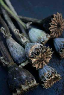 Gardening Autumn - ♔ Autumn in Blue - With the arrival of rains and falling temperatures autumn is a perfect opportunity to make new plantations Bleu Indigo, Deco Nature, Blue Home Decor, Deco Floral, Seed Pods, Wabi Sabi, Blue Brown, Navy Blue, Shades Of Blue