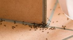 How to Get Rid of Ants - Consumer Reports Home Remedies For Ants, Ants In House, Black Ants, Get Rid Of Ants, Natural Solutions, Pest Control, Organic Gardening, How To Dry Basil, Cleaning Hacks
