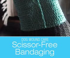 You're likely to provide some wound care for your dog be it after injuries or surgical incisions. Dog Health Care, Wound Care, Electrical Tape, Cool Inventions, Scissors, Afrikaans, Pet Stuff, Pets, Survival