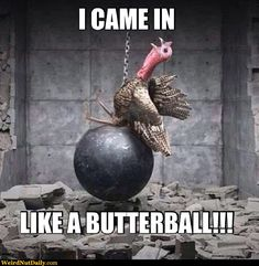 I came in like a Butterball!  I'm pretty sure I shouldn't be laughing this hard.