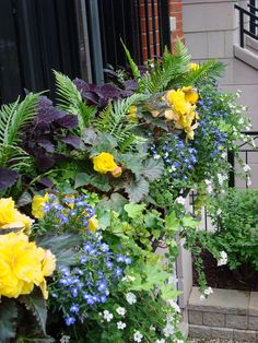 Summer | Annuals | Windowbox | Containers | Planters | Urban | Garden | Landscape | Design
