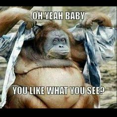 Check out: Animal Memes - Like what you see? One of our funny daily memes selection. We add new funny memes everyday! Bookmark us today and enjoy some slapstick entertainment! Memes Humor, Gym Memes, Gym Humor, Workout Humor, Humor Humour, Funny Animal Memes, Funny Animal Pictures, Funny Photos, Funny Animals