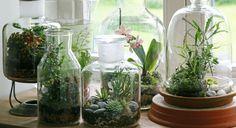 Amusez-vous à créer de jolis terrarium pour votre intérieur. Vase, bouteille ou flacon en verre, laissez libre cours à votre imagination et suivez nos conseils et astuces pour mettre la nature en ...