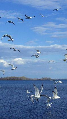 Seagulls, Sea, Landscape, Nature, Animal