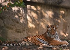Cleveland Zoo | Craig Markert | Flickr