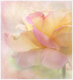 A delicate beauty of a rose~ Art Watercolor, Watercolor Flowers, Soft Colors, Pastel Colors, Pastel Flowers, Pastel Palette, Soft Pastels, Colours, Pretty Pastel