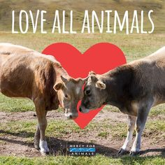 love all animals don't eat them