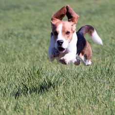 Look how fast I can run! My ears are flying above me.....