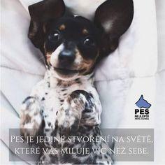 Dogs, Animals, Animal Pictures, Animales, Animaux, Pet Dogs, Doggies, Animal, Animais