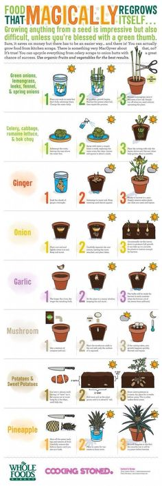 Self growing plants