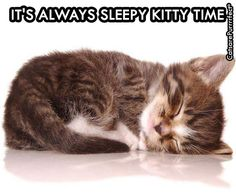 It Is Kitty Sleepy Time, Always! - Funny Animal Pictures With Captions - Very Funny Cats - Cute Kitty Cat - Wild Animals - Dogs