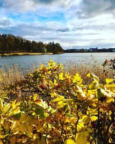 Hetki ennen sadetta. Just before the rain begins. 4.11.17. .  #luonto #aurinko #luontoonfi #mielenvirkistystä #ruska #syksy #meri  #töölönlahti #helsinki #myhelsinki #visithelsinki #detailsofhelsinki #ig_helsinki #suomi100vuotta #suomi100 #finland #ig_finland  #nature #ig_nature #sun #autumn #ig_autumn #autumncolors #fall #fallcolors #shadesofyellow #yellow #enjoynature #sea #iphonephoto Reposted Via @annebirdy