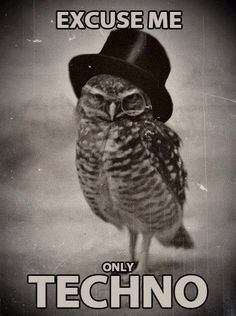The owl says Techno!