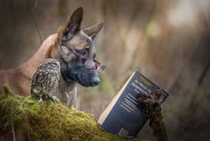 ieangelheart:messyjessiesplayground:  lonelyprincesskitten:  avianawareness:The Unlikely Friendship Of A Dog And An Owl by A Professional Animal Photographer Tanja Brandt ᴷᴬ  OMG! so cute!  So amazing!  We need a german shepherd in our little pack.