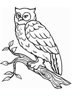 civetta_2 disegni da colorare per adulti