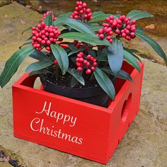Personalised Christmas Plant Pot Holder