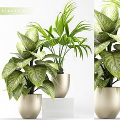 Find your Grapfix Desire With US Small Plants, Indoor Plants, Free Plants, Office Plants, Shrubs, Leaves, Vase, Landscape, Flowers