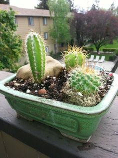 Cactus garden in an antique pot