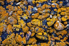 Moldy Stone Texture Free Stock Photo