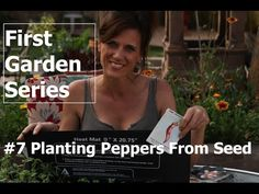 Planting peppers from seed is easy plus tip for quicker germination.  Mine germinated in 5 days with this tip!
