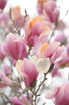 Tulip tree - so springy