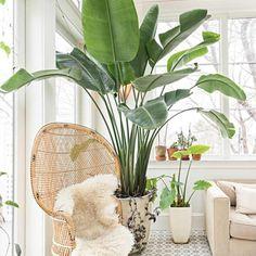 5 tips για καταπράσινα φυτά εσωτερικού χώρου!