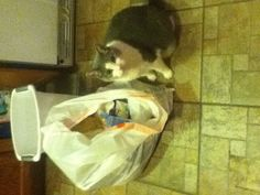 This is my cat early in the morning on a Saturday garbage snooping because we had a BIG party yesterday!!