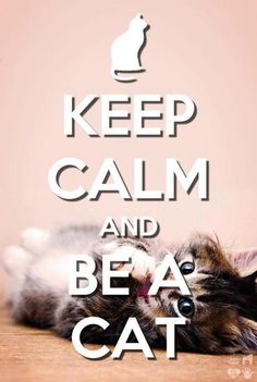 Keep calm to my cat Precious...oh wait. I don't have to tell her that. She's always calm!