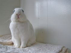 Vogueing Bunny Fine Art Bunny Photography Home by invisibletoast, $20.00