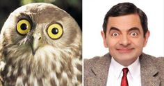 celebrities-and-their-animals-look-a-likes-20