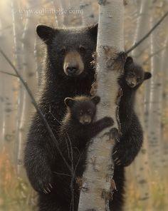 Mama Bear -- Mother black bear with cubs.