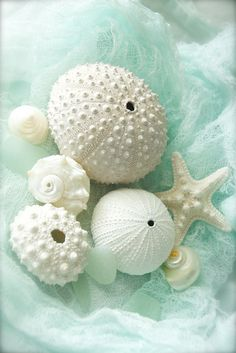 Untitled photo -- description: ivory colored shells in a nest of mint Cottages By The Sea, Beach Cottages, Ocean Beach, Summer Beach, Sea Foam, Sea Creatures, Belle Photo, Starfish, Seashell Art
