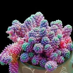 Buy mixed lithops seeds rare succulent seeds Ass flower seeds Pseudotruncatella Living Stone bonsai mini garden plant at Wish - Shopping Made Fun Colorful Succulents, Cacti And Succulents, Planting Succulents, Planting Flowers, Flowering Succulents, Potted Plants, Garden Plants, Colorful Plants, Air Plants