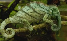 These are the animals of a parallel universe that we should probably be thankful does not exist. However, some of these animal mashups are really cute. The Animals, Funny Animals, Animals Planet, Large Animals, Especie Animal, Mundo Animal, Photoshopped Animals, Chameleon Lizard, Chameleon Color