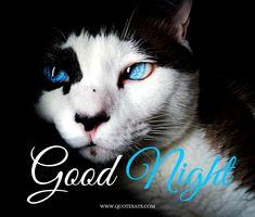 Good Night Cat Eyes Good Night Cat, Good Night To You, Cute Good Night, Good Night Quotes, Beautiful Good Night Images, I Love You Images, Good Morning Images, Good Night Flowers, Good Night Greetings