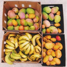 fullyrawmarie:  Thanks Plant Foods Perth for my 20kg of organic mangoes ($4 a kilo) and 10kg of bananas!
