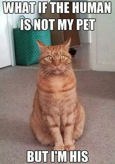 Cats that make me chuckle !