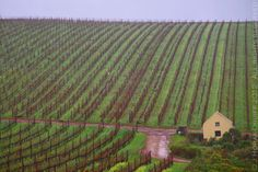Waterkloof winery, South Africa Inspiring Photography, Outdoor Photography, African Life, South Africa, Stripes, Australia, Country, Places, Beautiful