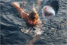 Great White Shark Attacks On Humans | sharks eating people sharks sharks sharks sharks sharks