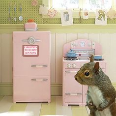 Squirrel in the kitchen.