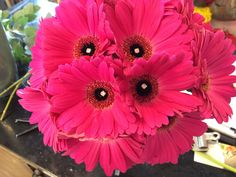Hand tied of hot pink gerberas gerbera daisy bouquets for wedding | ... gerbera daisy bouquet