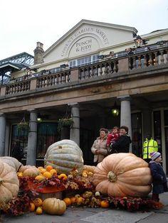 Huge pumpkins