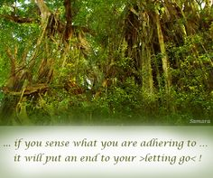 ... if you #sense what you are adhering to … it will put an end to your >letting go< !