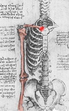 Axial shoulder anatomy