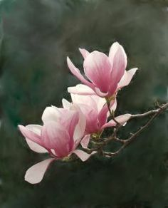 Paintings of magnolias trees - Google Search