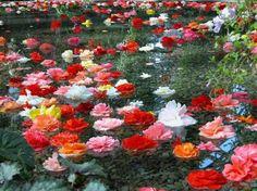 preciosas flores en el campo