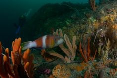 Marine reserves help fish resist climate change invaders - Technology Org