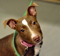 Looking to adopt?  Try petfinder.com.